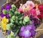 庭の花をドライフラワーに